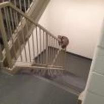 Radnom funny picture tags: raccoon sliding down banister hand-rail