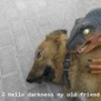 Radnom funny picture tags: raptor dog hello-darkness-my-old-friend dinosaur accepted-fate