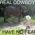 Radnom funny picture tags: real cowboys nofear bison baby
