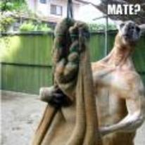 Radnom funny picture tags: ripped kangaroo using-this-punch-bag mate muscle