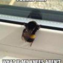 Currently trending funny picture tags: sad bee looking-out-window bees-knees what-if-they-arent-that-great