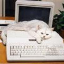 Radnom funny picture tags: sad-cat tandy computer YOSPOS sad-cat-on-computer