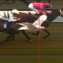 Radnom funny picture tags: seagull photobombs horse-racing photo-finish horse