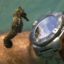 Radnom funny picture tags: seahorse looking-at watch diver underwater