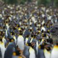 Radnom funny picture tags: seal hiding with penguins suspect-nothing