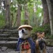 Radnom funny picture tags: shiba-inu cat hat china japan