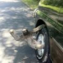Radnom funny picture tags: sloth riding car wheel hanging-on