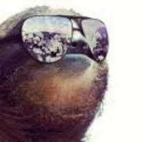 Currently trending funny picture tags: sloth sunglasses shades money reflection