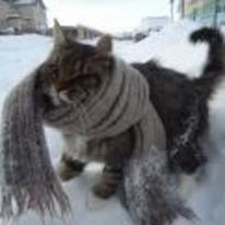 Radnom funny picture tags: smug cat scalf snow satisfied