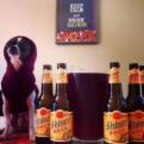 Radnom funny picture tags: smug dog beer bottles shiner