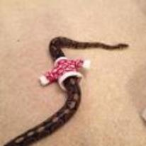 Radnom funny picture tags: snake wearing christmas-jumper christmas sweater