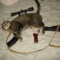 Radnom funny picture tags: sniper-scope cat scope sniper bed
