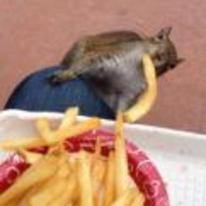 Currently trending funny picture tags: squirrel stealing chips fries food