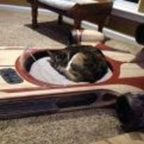 Radnom funny picture tags: star-wars speeder cat-bed cat asleep