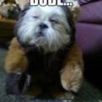 Radnom funny picture tags: stoned dog star-wars wookie ewok