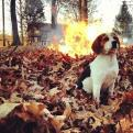 Radnom funny picture tags: suspicious dog starting fire cool-dogs-dont-look-at-explosions