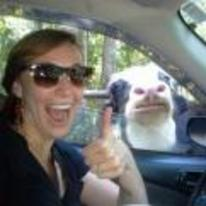 Radnom funny picture tags: taking-selfies cow car window photobomb