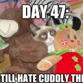 Radnom funny picture tags: tard grumpy-cat still-hates-cuddly-things ET toys