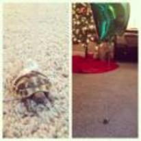 Currently trending funny picture tags: tortoise balloon tied birthday turtle