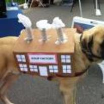 Radnom funny picture tags: unhappy dog poop factory costume