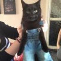 Radnom funny picture tags: unimpressed cat demin Dungarees jeans