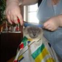 Radnom funny picture tags: unimpressed cat hair-cut crazy cat-lady