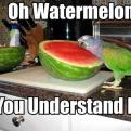 Radnom funny picture tags: watermelon bird understand head parrot