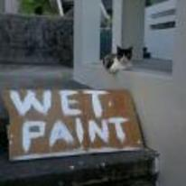 Radnom funny picture tags: wet-paint cat sitting-on-wall doesnt-care so-what