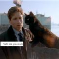 Radnom funny picture tags: x-files Fox-Mulder are-you-a-ufo cat David-Duchovny